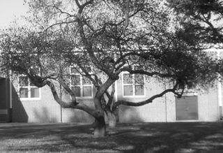 Tangledtrees