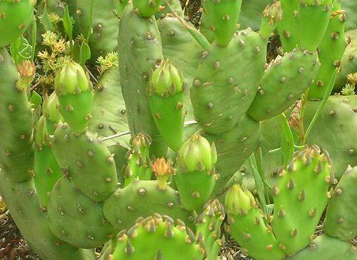 Cactusdetail